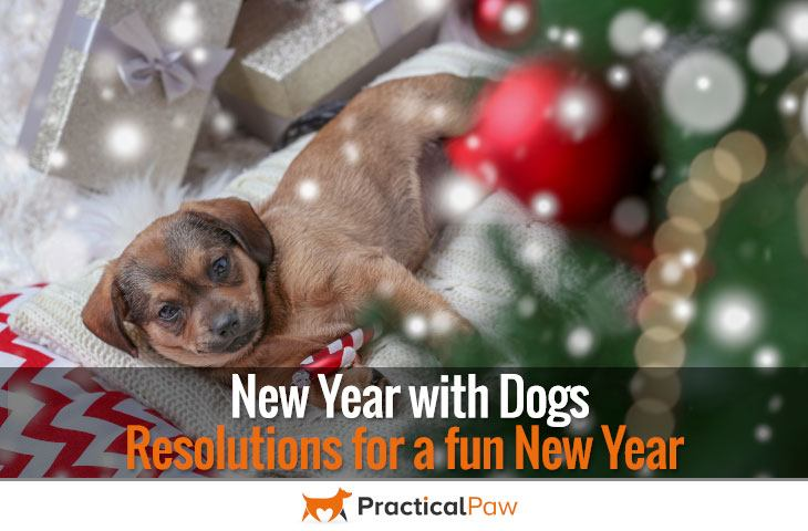 New Year with Dogs - Resolutions for a fun New Year