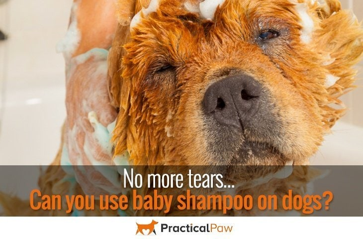 No more tears, can you use baby shampoo on dogs? - PracticalPaw.com