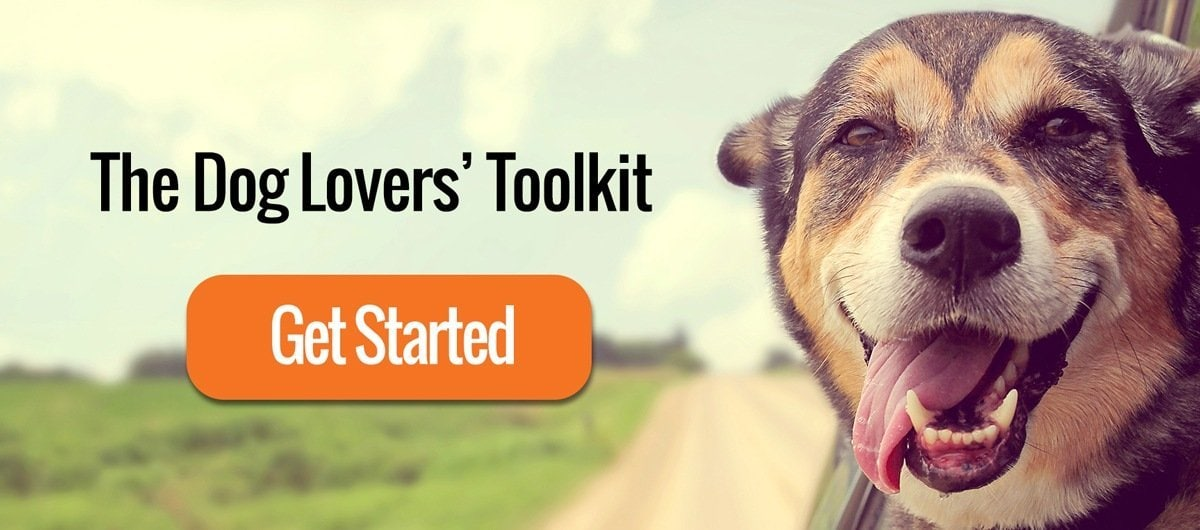 Practical Paw The Dog Lovers Toolkit