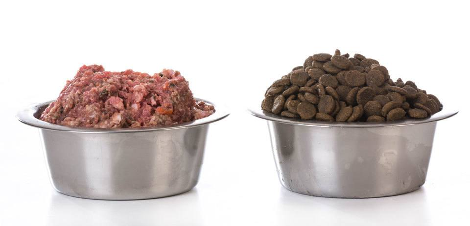 Raw-dog-food-pros-and-cons