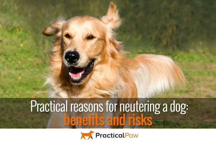 Practical reasons for neutering a dog