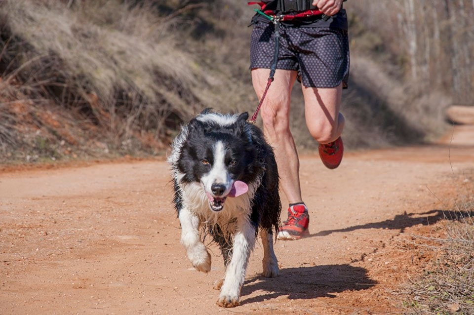 Running-leash-for-dogs