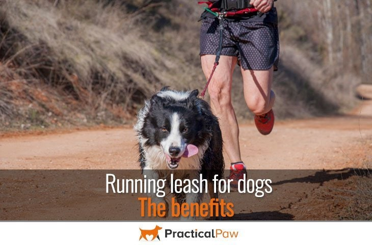 Running leash for dogs