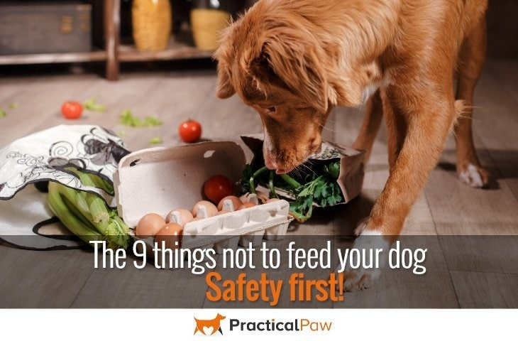Safety first - The 9 things not to feed your dog - PracticalPaw.com