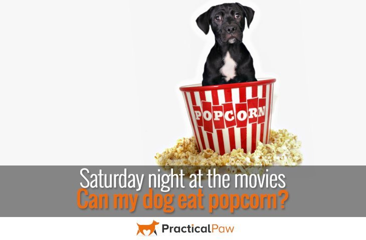 Can my dog eat popcorn - PracticalPaw.com