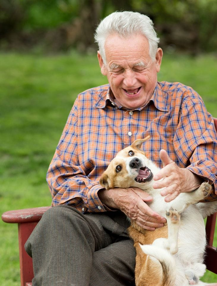 best dogs for elderly owners