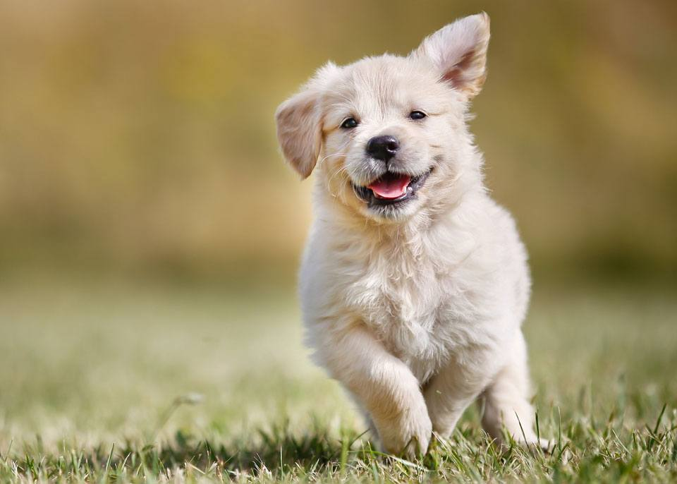 Signs of a happy dog