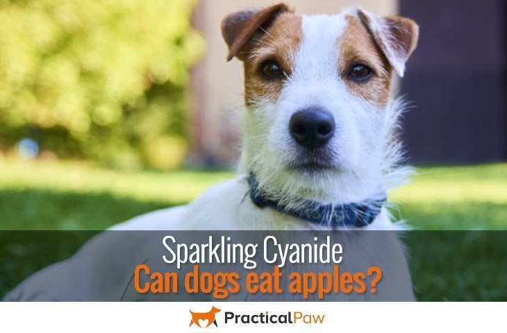 Sparkling cyanide, can dogs eat apples - PracticalPaw.com