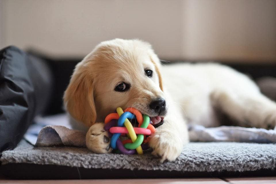 Stop-puppy-biting--toys