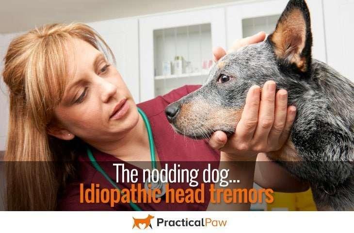 The nodding dog, Idiopathic head tremors - PracticalPaw.com