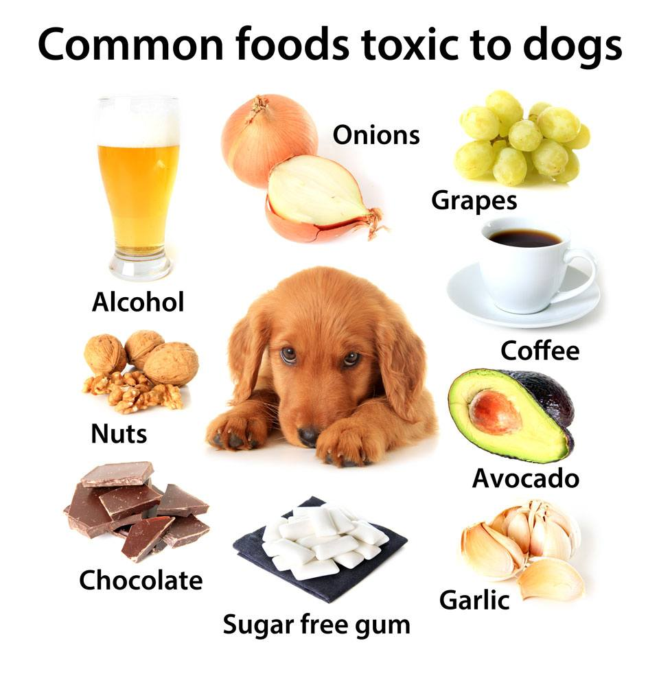 Safety First; The 9 Things Not To Feed Your Dog