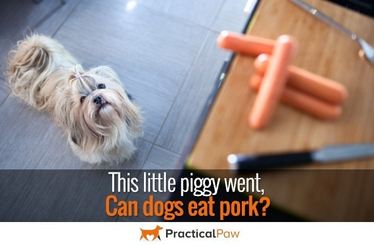 Can dogs eat pork - PracticalPaw.com