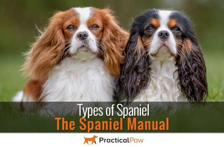 Types of Spaniel