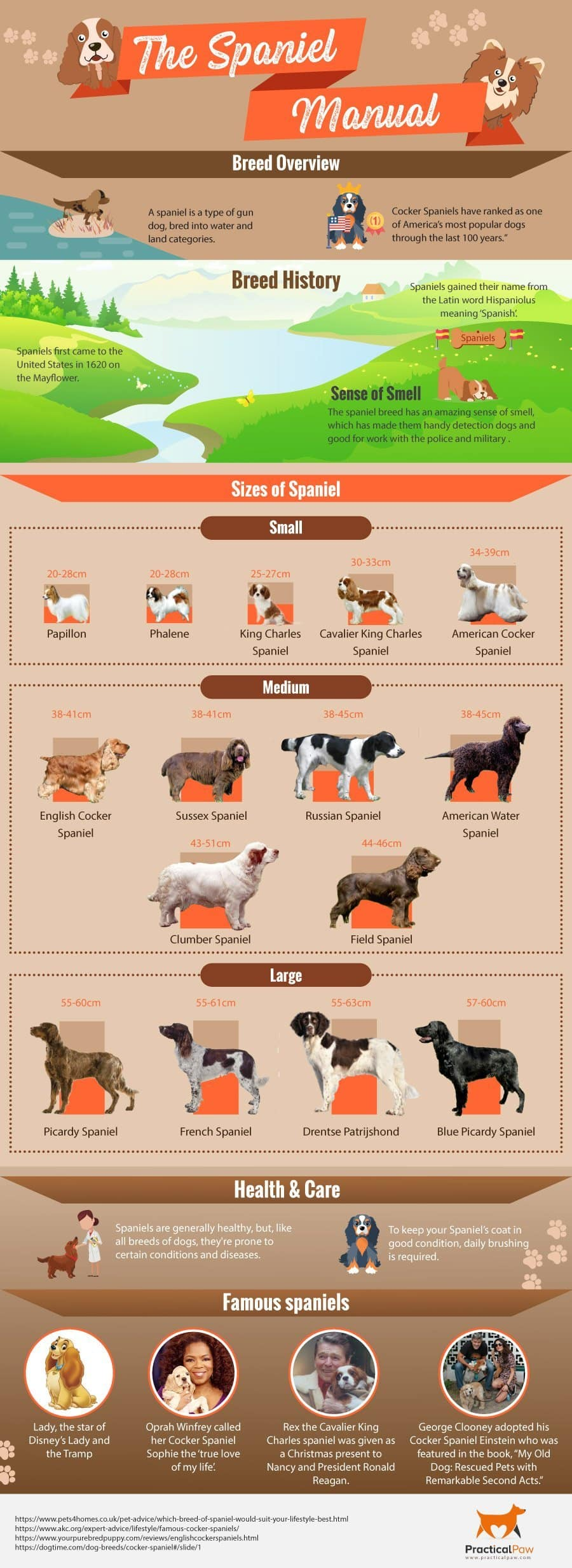 Types of Spaniel (infographic)