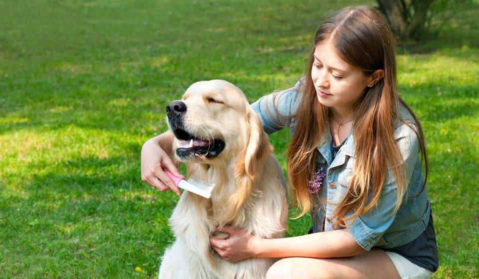 Best-Dog-for-First-Time-Owners-Golden-Retriever