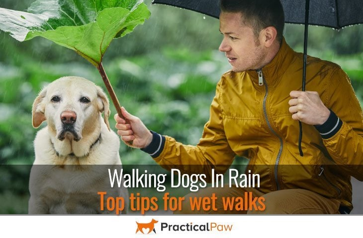 Walking dogs in rain