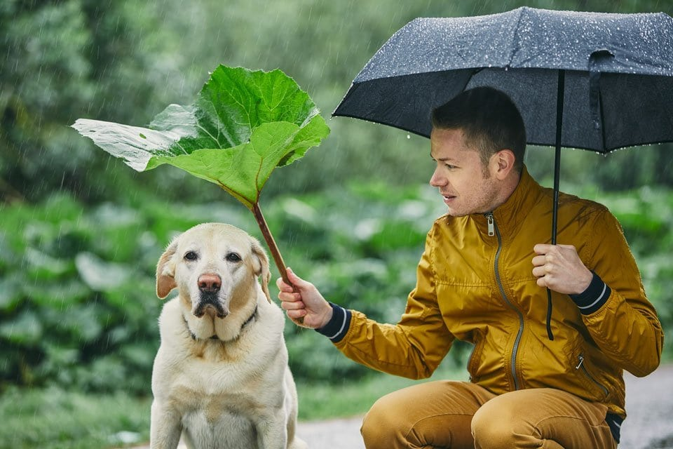 Walking-dogs-in-rain