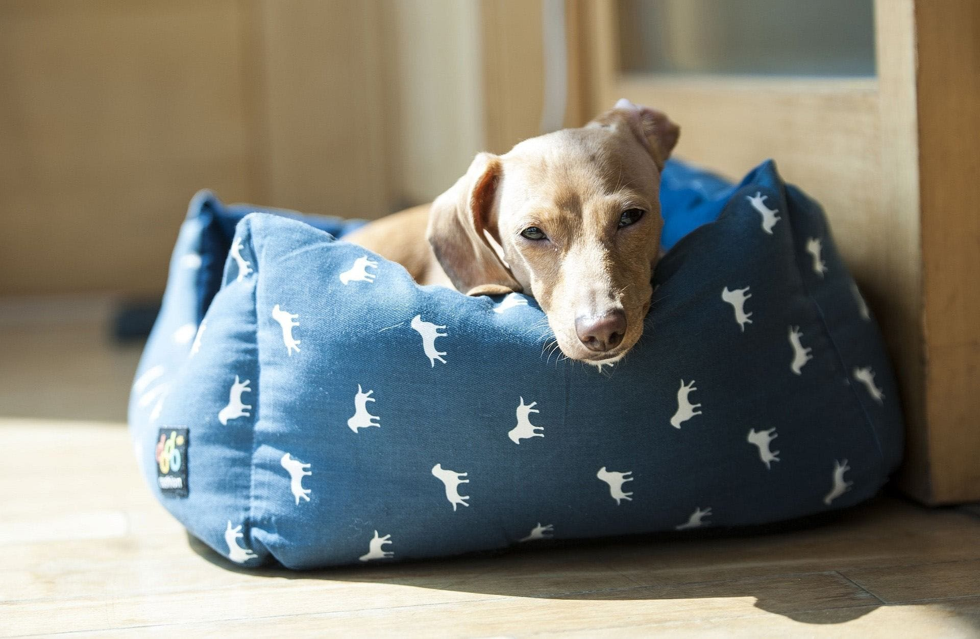 luxury dog beds indestructible bed of chew the tough really unique proof uk elegant