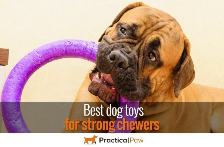 best dog toys for strong chewers