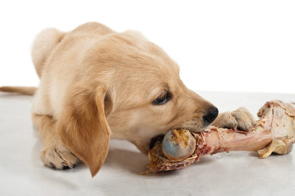 Can dogs eat cooked bones