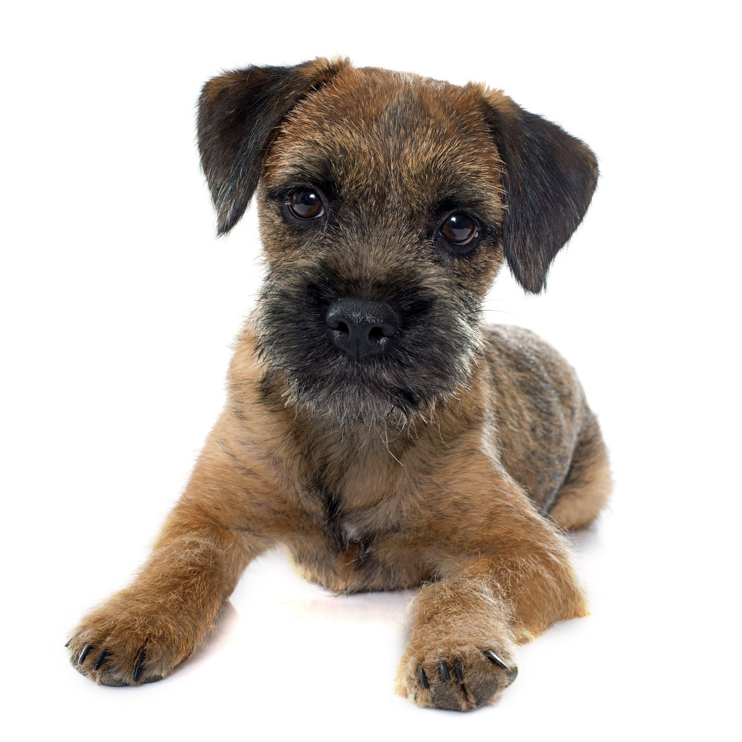 Medium Dog Breeds Short Hair