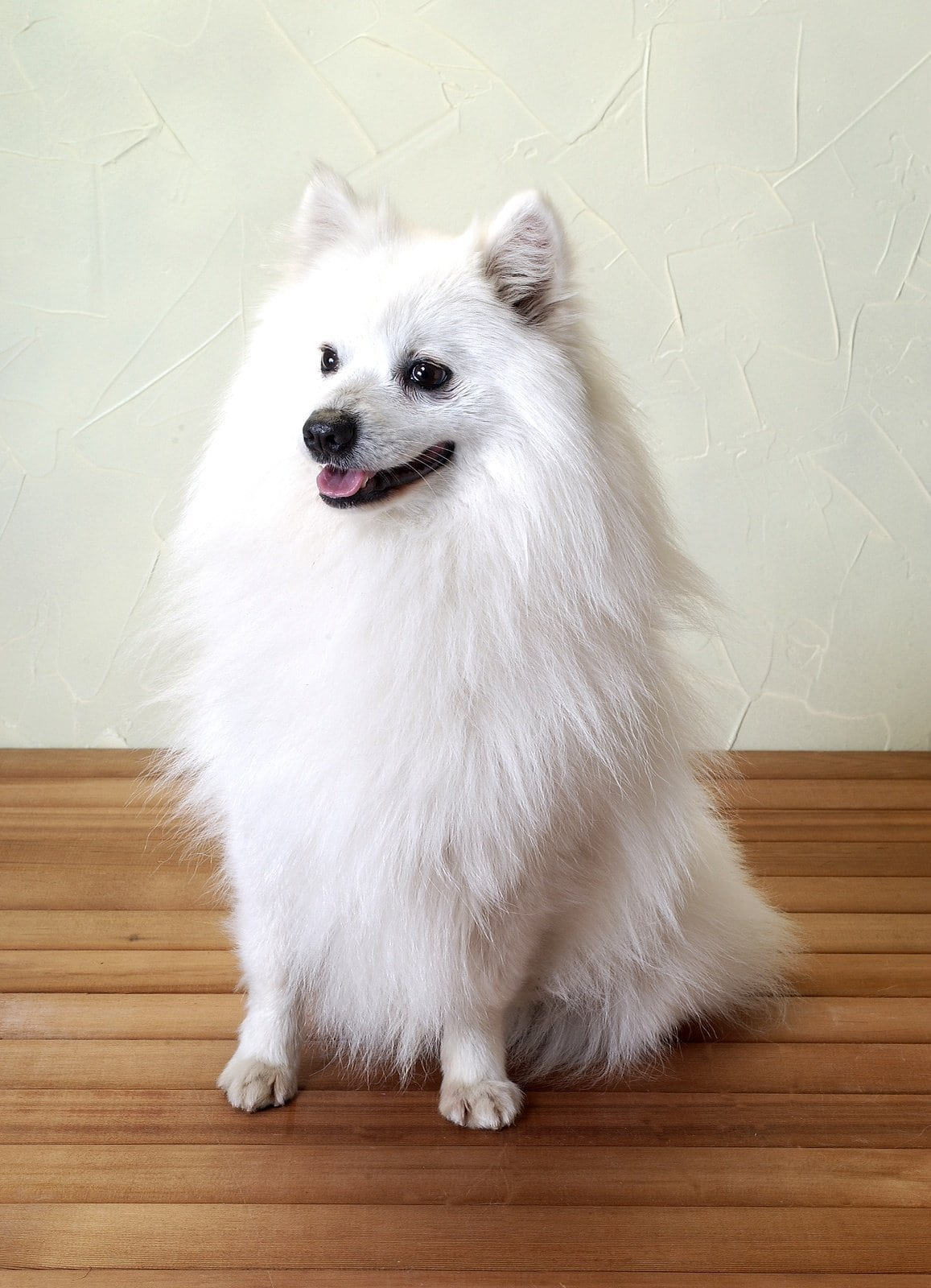 Small Energetic Dog Breeds