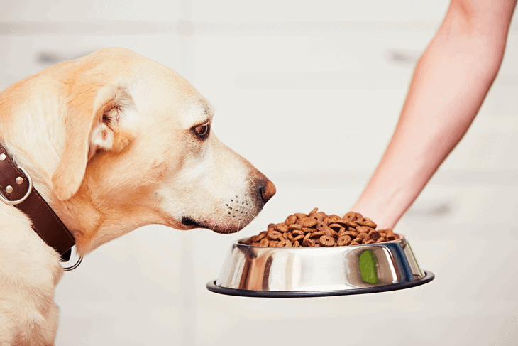 Can Dogs Digest White Rice