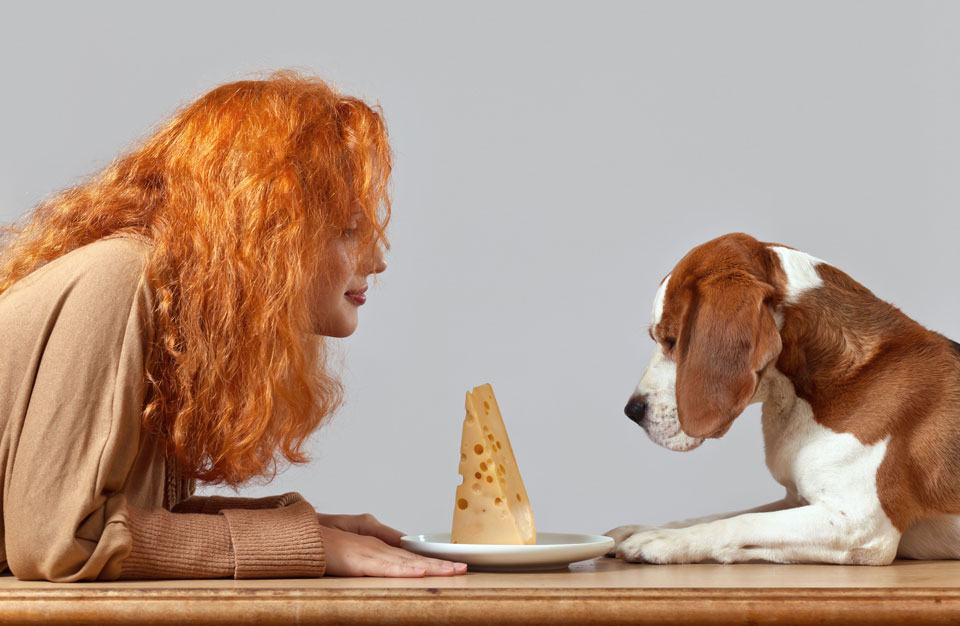 can-i-give-my-dog-cheese