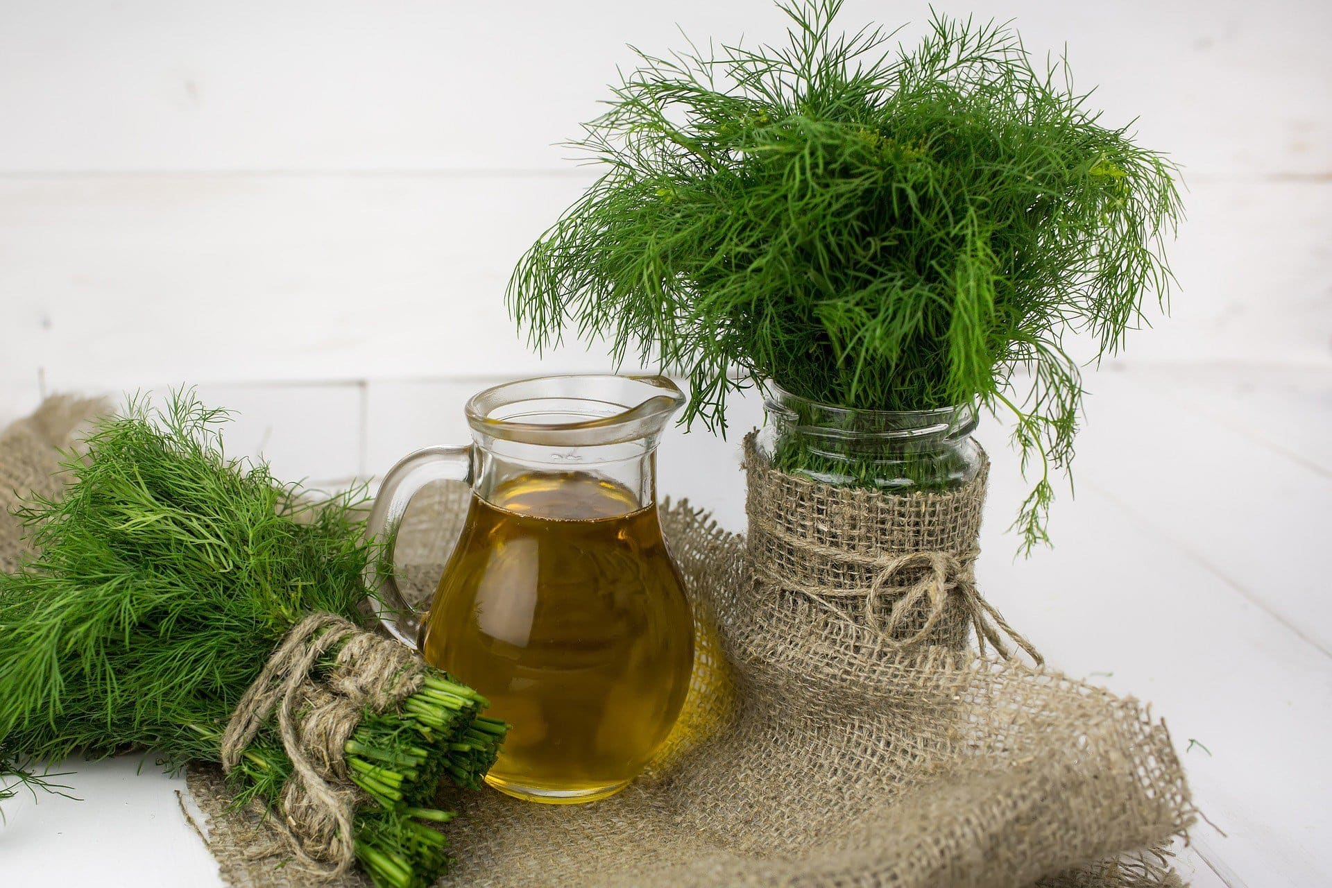 dill safe herbs for dogs