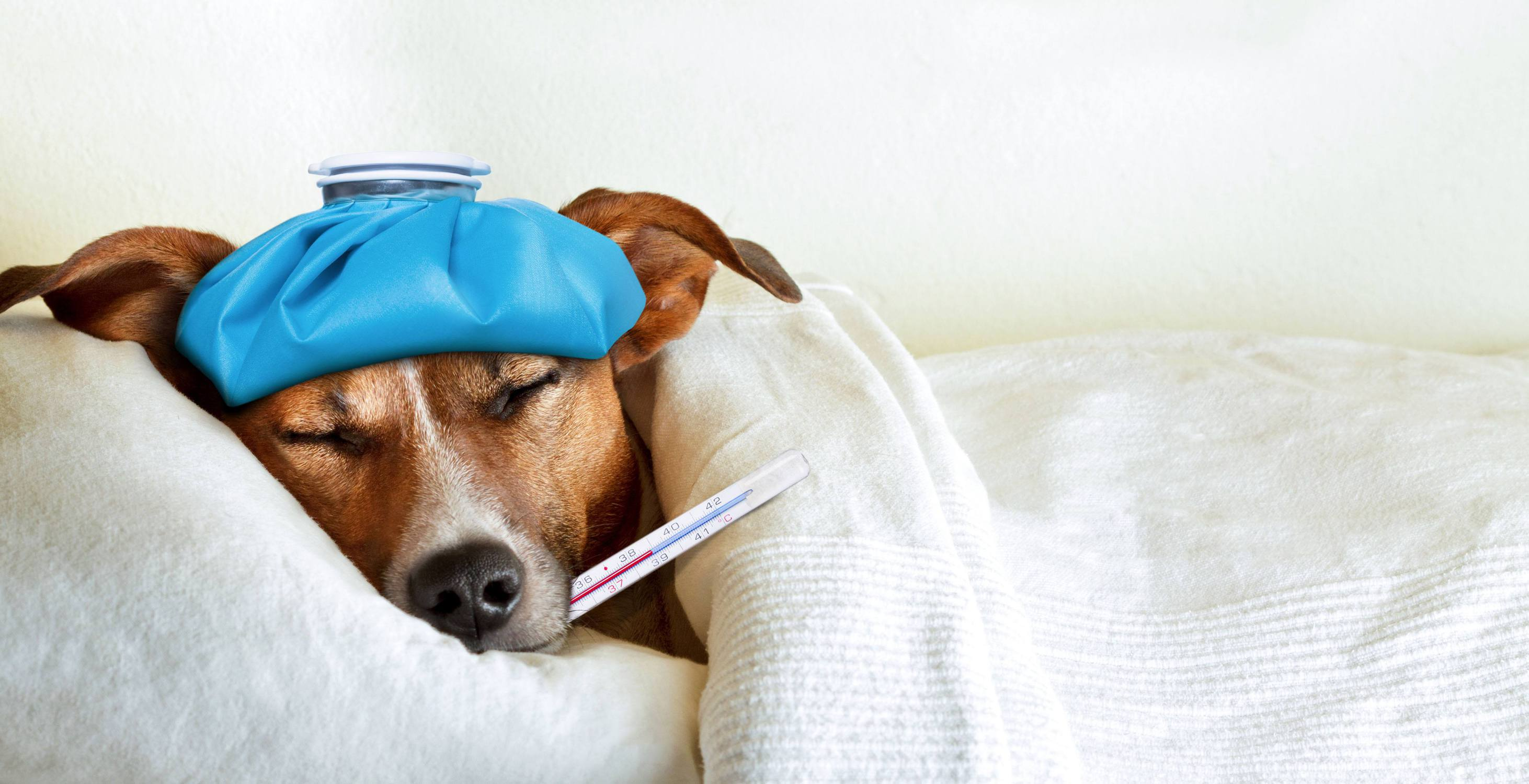 Do dogs get colds
