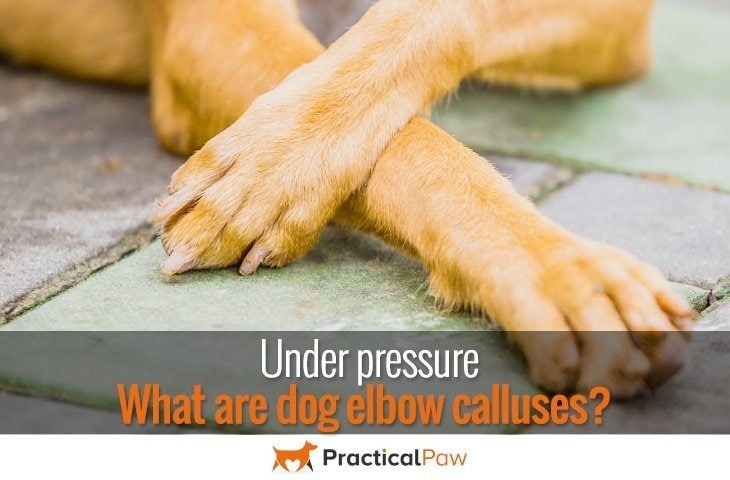 what are dog elbow calluses?