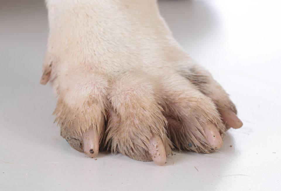 9 of the best dog nail clippers for tidy toes - Practical Paw | The ...