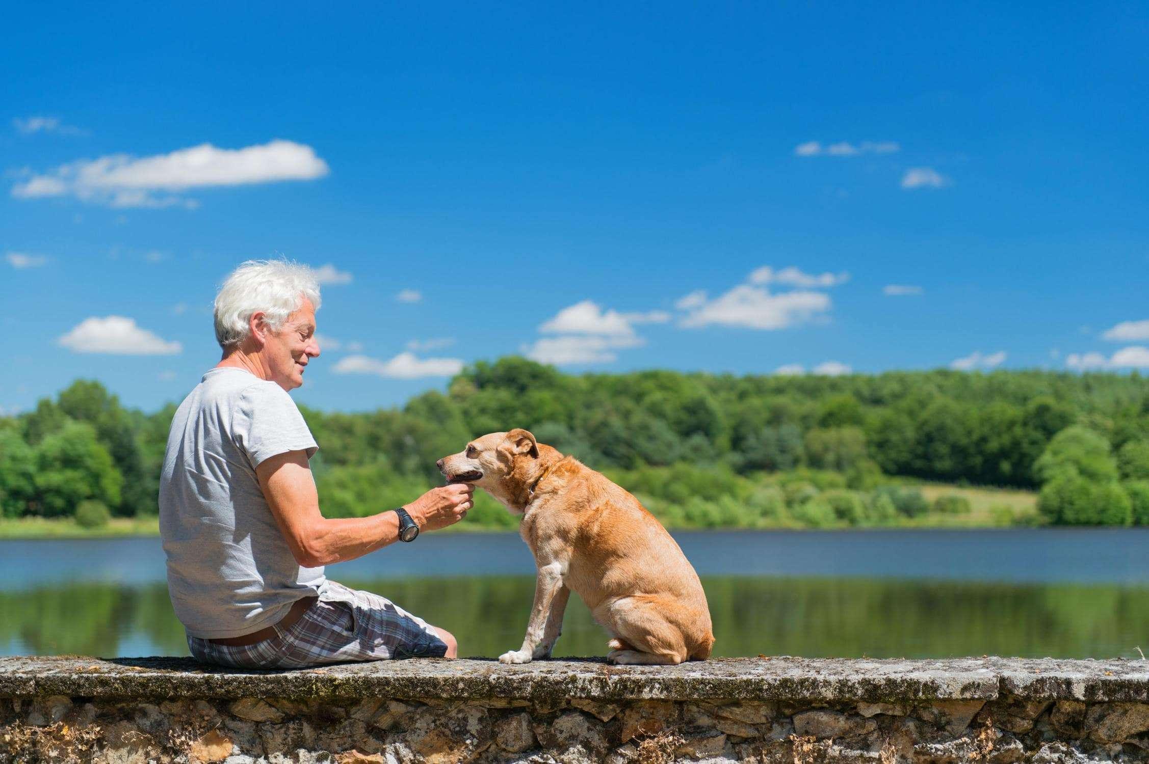 dogs for elderly