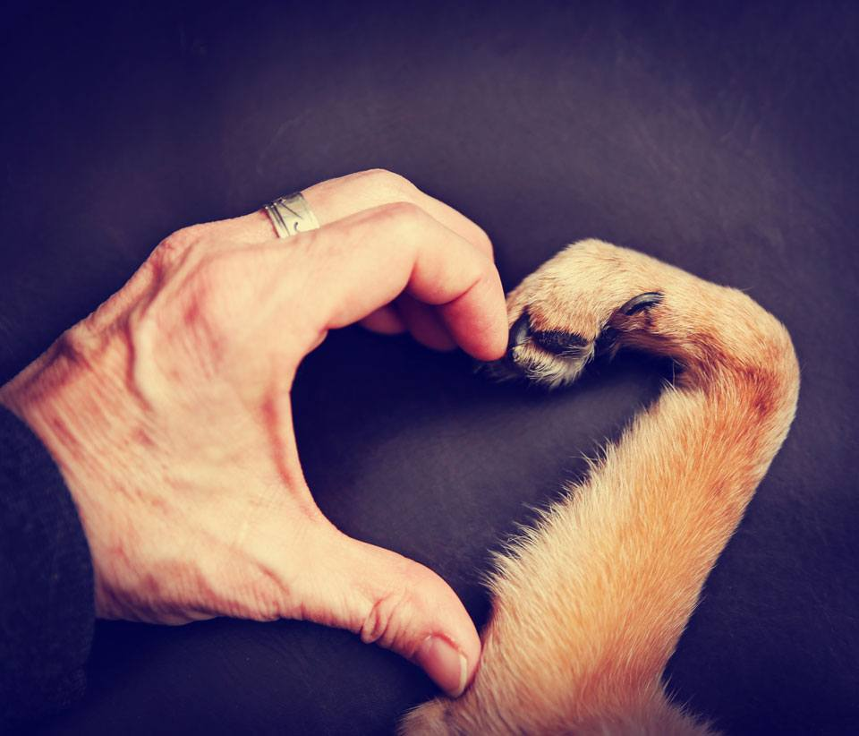 facts about dog paws