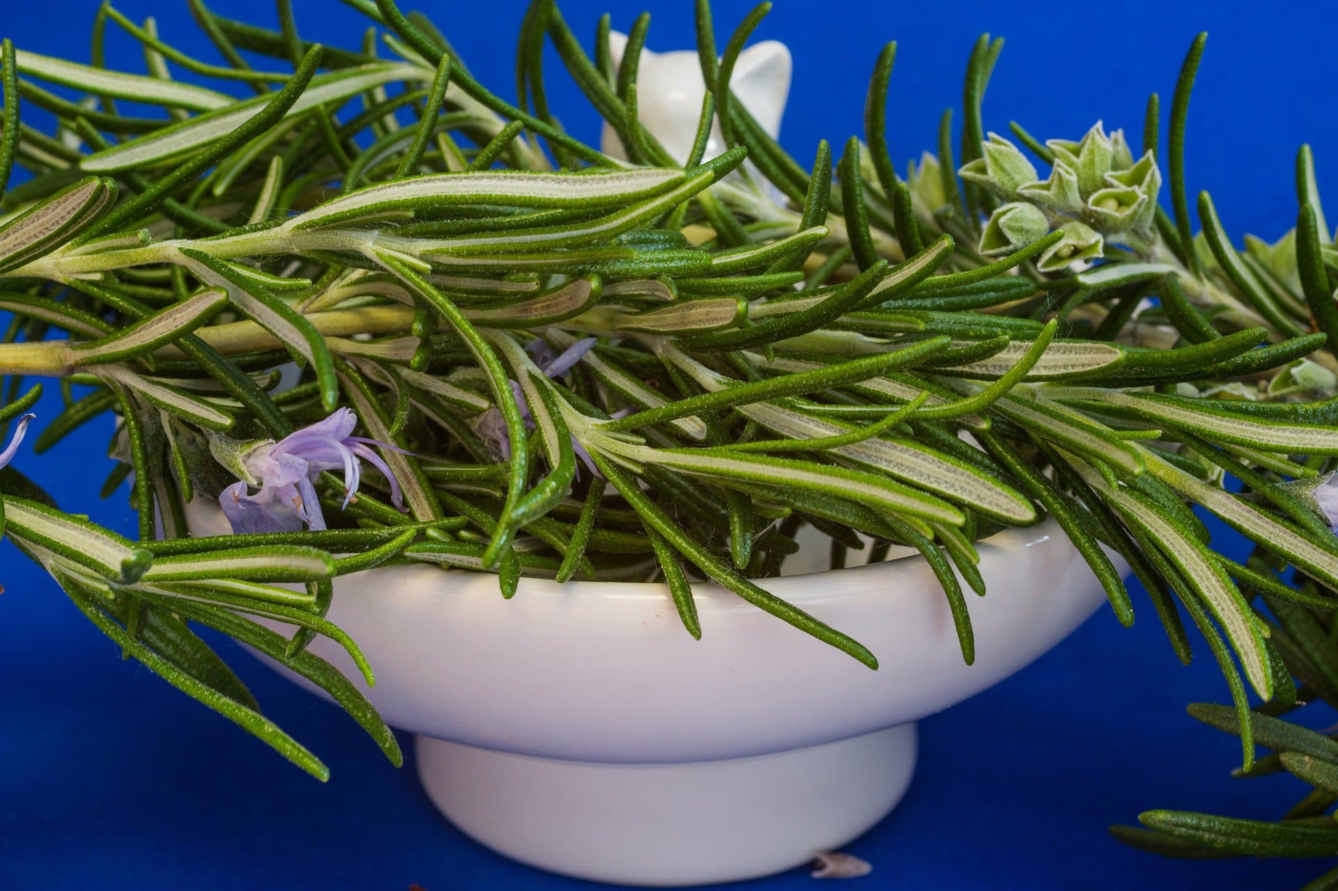 rosemary safe herbs for dogs